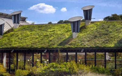 Debunking 6 Myths About Green Roofs People Still Believe