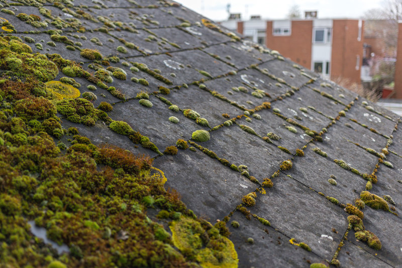 what is roof algae and how to fix it