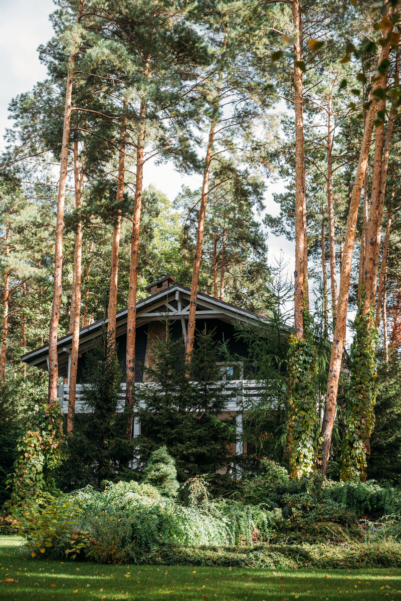 maintain your trees to protect your roof